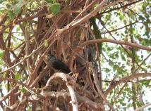 black bird on the tree