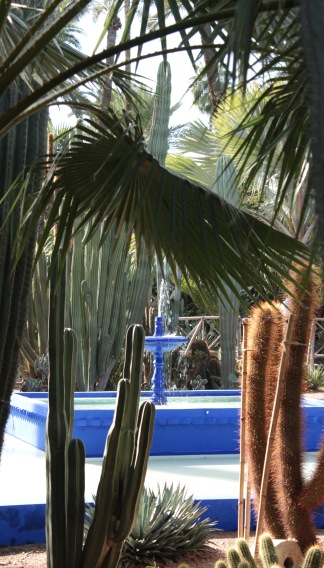 fountain cacti and palm tree